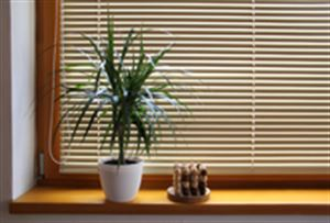 Picture of Venetian Blinds